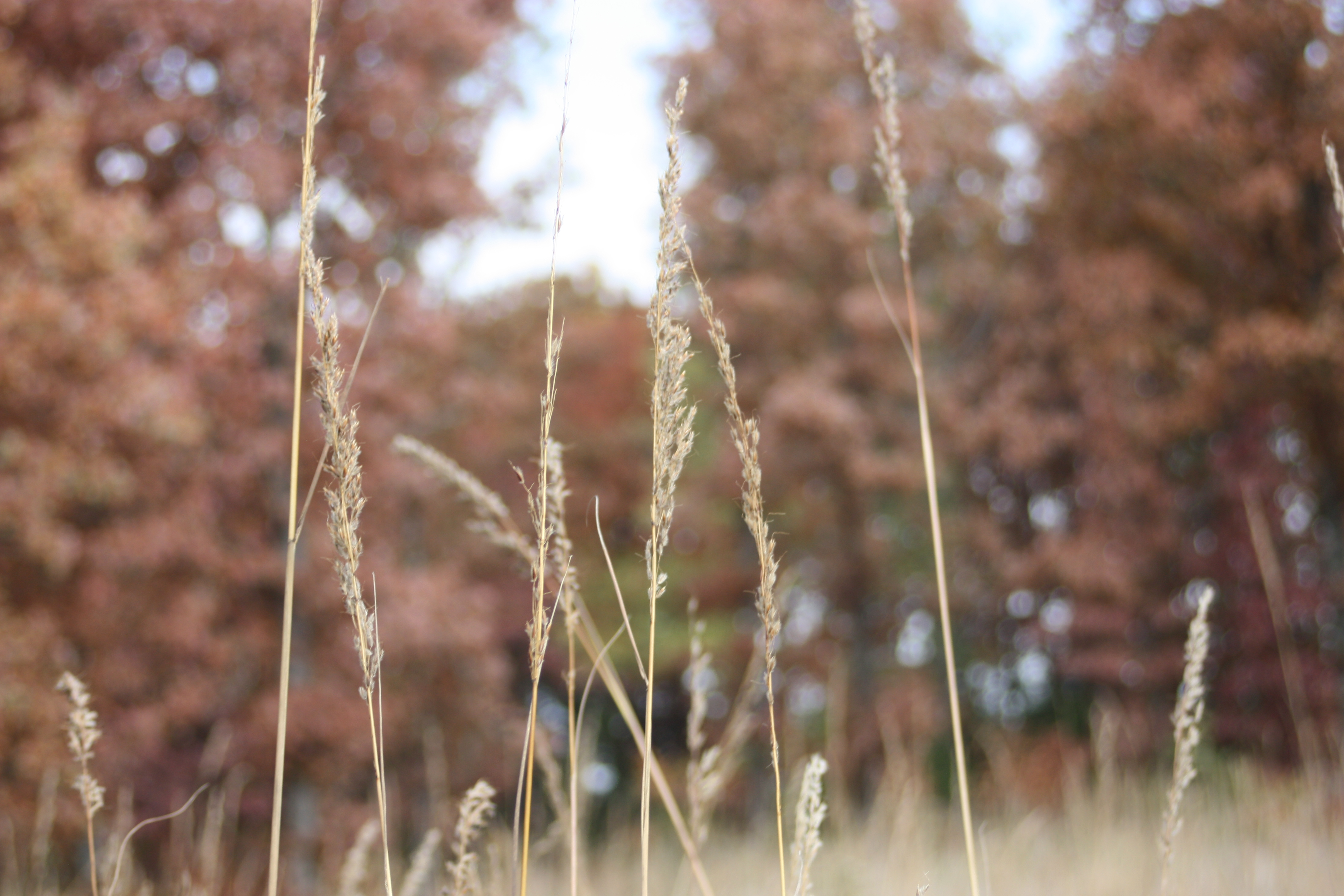 What Kind Of Grass Will Grow Under Oak Trees : Even in fall winter native plants will provide pubwages