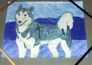 Picture of the Siberian Husky Natasha was drawn on the blank side of an unwanted sheet of paper.
