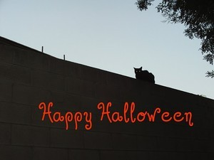 A photograph and text that I used to make my Halloween cat card.
